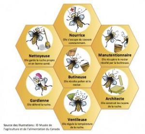 fonctions-abeilles